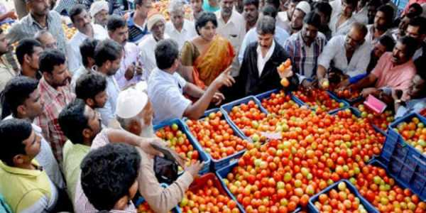 Of the 4,500 tonnes of tomatoes, only 989 tonnes had arrived in the country so far. (Photo|PTI)
