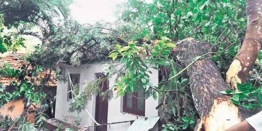 The house on which a tree fell in Tarikatte, Madikeri, on Friday.